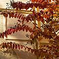 Dainty Branches - Warm Autumn Colors - Washington D C Facades by Georgia Mizuleva