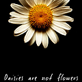 Daisies Are Not Flowers Fractal Version by Weston Westmoreland