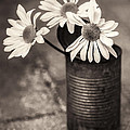 Daisies Can by Nancy Strahinic