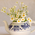 Daisies In A Teapot by Peggy Collins