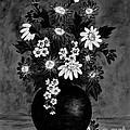 Daisies In Black And White by Barbara Griffin