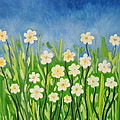Daisies In The Spring by Simi Sherin
