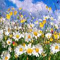 Daisies On A Hill - Impressionism by Georgiana Romanovna