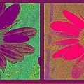 Daisies Purple Pink by Linda Galok