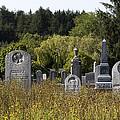 Daisies Round The Grave by Lorraine Devon Wilke