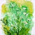 Daisies by Zaira Dzhaubaeva