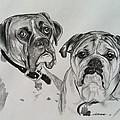 Daisy And Duke by Sarah Counter