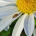 Daisy And Its Friend 2 by Rima Biswas
