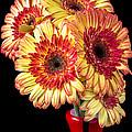 Daisy Bouquet by Garry Gay