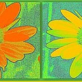 Daisy Collage Yellow Orange by Linda Galok