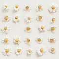 Daisy Collection by Cassia Beck