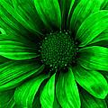 Daisy Daisy Neon Green by Angelina Vick