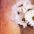 Daisy Delight by Betty LaRue