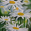 Daisy Garden by Sharon Freeman