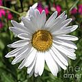 Daisy by Go Inspire Beauty
