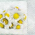 Daisy by Heike Hultsch