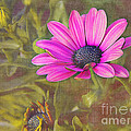 Daisy In Pink by Judi Bagwell