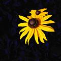 Daisy On Dark Blue by Kathleen Illes