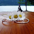 Daisy Unity Rings by Nicki Bennett