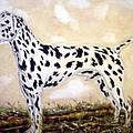 Dalmatian by Pat Mchale