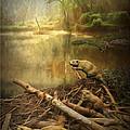 Dam Beavers by Michael Pittas