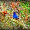 Dance Of Blue Jay by Susan Garren