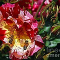 Dancing Bees And Wild Roses by Absinthe Art By Michelle LeAnn Scott