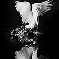Dancing Feathers by Jaime Crosas