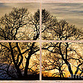 Dancing Forest Trees Picture Window Frame Photo Art View by James BO Insogna