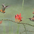 Dancing In The Flowers by Angie Vogel