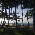 Dancing Palm Trees by Angela Bushman