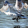 Dancing Swan by Heike Hultsch