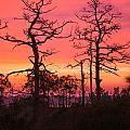 Dancing Trees Into The Fire by Paula OMalley