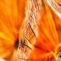 Dandelion Abstract Paint by Odon Czintos