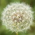 Make A Wish by Dan Sproul
