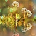 Dandelion Delight by Fraida Gutovich