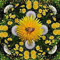 Dandelion Grove Mandala by Susan Bloom