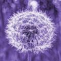 Dandelion In Purple by HW Kateley