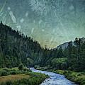Dandelion Moon by Belinda Greb