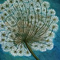 Dandelion Painting     Sold by Christiane Schulze Art And Photography