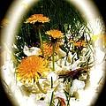 Dandelion Time by William Hallett