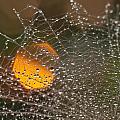 Dandelion With Droplets Close-up by Olga Tkachenko