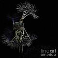 Dandelions by Heiko Koehrer-Wagner