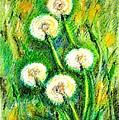 Dandelions by Zaira Dzhaubaeva