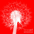Dandylion Red by Clayton Bruster