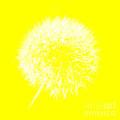 Dandylion Yellow by Clayton Bruster
