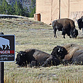 Danger Do Not Approach Wildlife by Bruce Gourley
