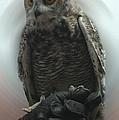 Danish Forest Owl Living In Denmark  by Colette V Hera  Guggenheim