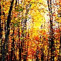 Dappled Sunlight by Tina Meador