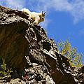 Dare To Climb by Jeremy Rhoades